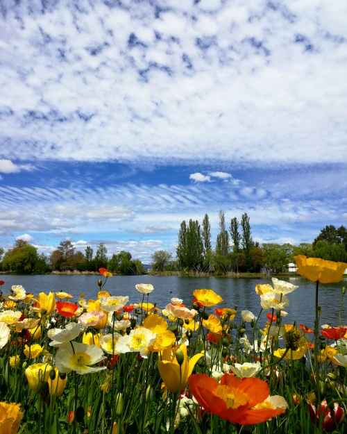 Floriade Canberra Australia 7th October 2017 Sonya Heaney Oksana Heaney Flowers Spring Commonwealth Park Lake Burley Griffin Nature