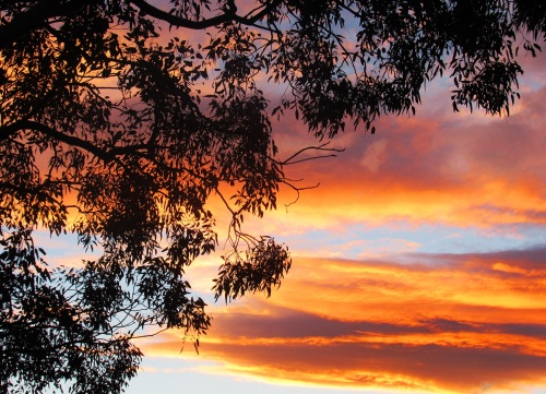 Canberra Spring Sunset After the Rain Sonya Heaney 6th November 2017 Sky Clouds Nature Tree