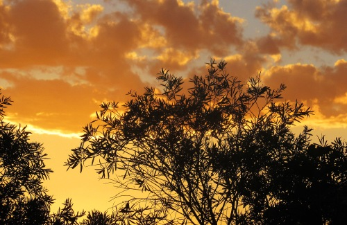 First Sunset of 2018 Sonya Heaney Canberra Australia Sky Clouds Summer Garden Nature