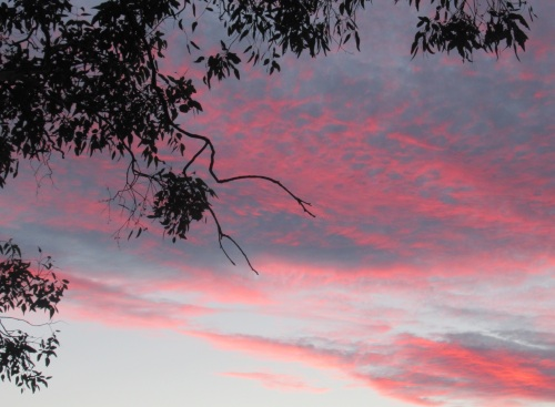 Canberra Australia Sunset Autumn Tuggeranong Sonya Heaney 15th March 2018 March Garden Sky Nature