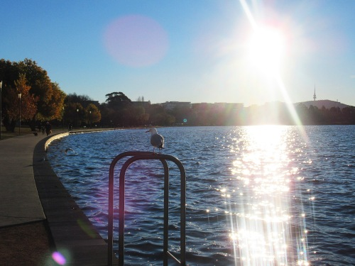 Winter Lake Burley Griffin Canberra Australia Sunny Afternoon Seagull Sonya Heaney Sunshine Nature 23rd June 2018