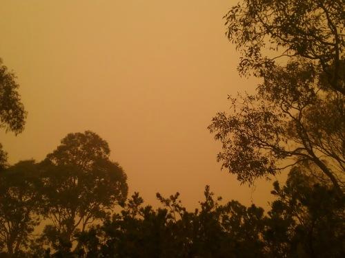 Canberra Australia Bushfire Smoke 5th January 2019 Sonya Heaney Nature Natural Disaster 1