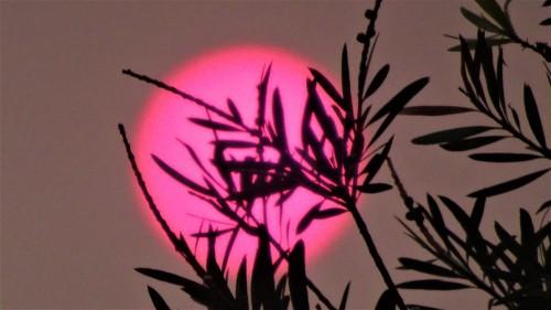 Canberra Australia Bushfire Sunset Smoky Sky Evening Sonya Heaney 13th January 2020 1
