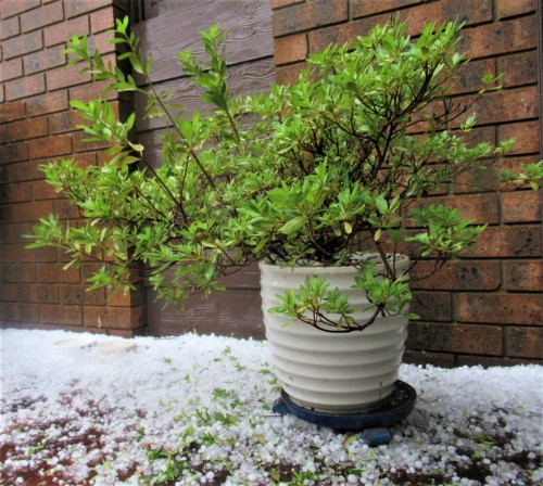 Hailstorm southern Canberra Australia Sonya Heaney 16th January 2020