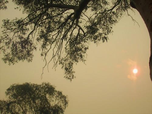 New Year's Day morning Bushfire Smoke Tuggeranong Canberra Australia Sonya Heaney 1st January 2020