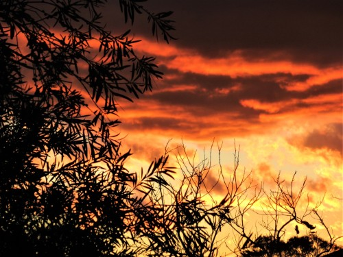 Autumn Sunset Canberra Australia Sonya Heaney 18th May 2020 Sky Nature 2