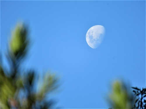 Blue Sky Clear Moon 430pm Canberra Australia Sonya Heaney 3rd May 2020